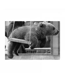Black & White 2 Swinging Bear 37