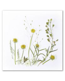 Flower Art 36