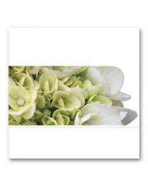 Condoleance (V) 04 Blanco