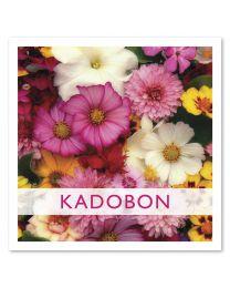 Kadobon 12