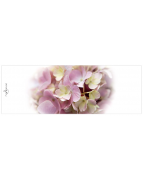 Pure & Natural 42 Blanco (hortensia)